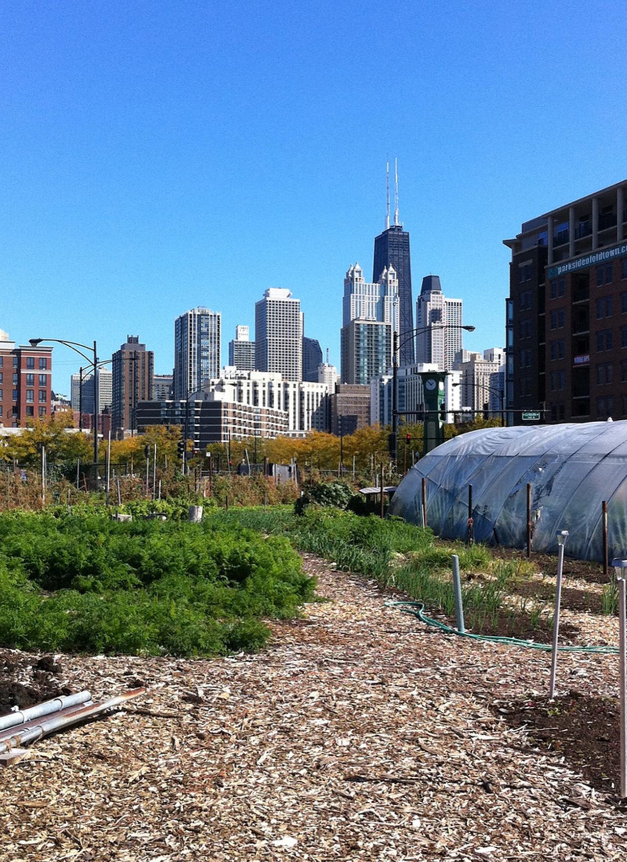 urban farm  Dan Pitera  Stream 03  PCA-Stream