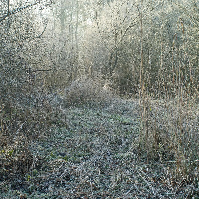 gilles clement yann monel tiers paysage nature somme jardinier patûre