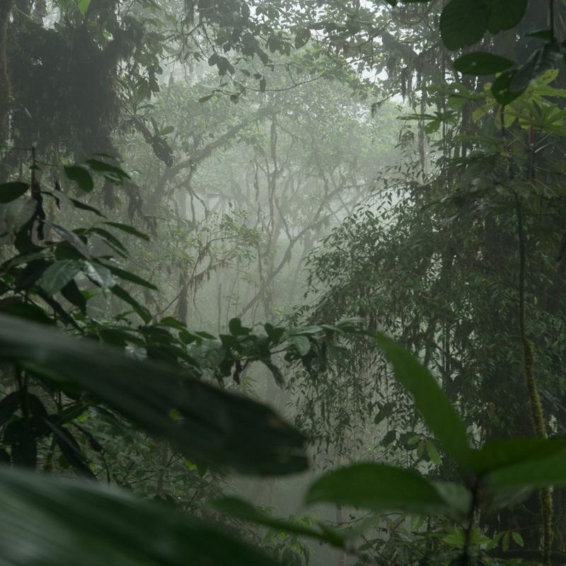 eduardo kohn the living thought amazonian forest